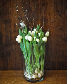 21 white tulips with bulb and vase