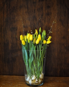 21 yellow tulips with bulb and vase