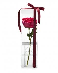Acrylic box 1 cyclam rose