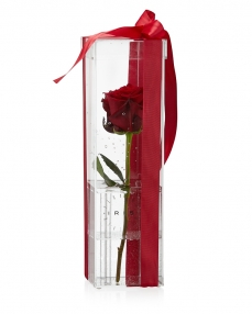 Acrylic box 1 red rose