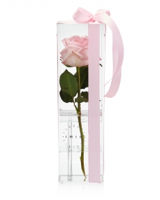 Acrylic box 1 pink rose