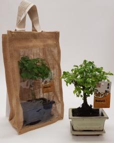 Bonsai 'Traditional' in Jute 33 cm
