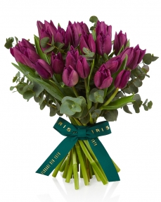 Bouquet 25 purple tulips