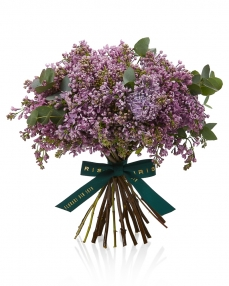 Bouquet with 13 lila syringas