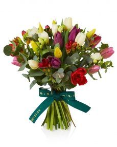 Bouquet of 31 tulips and freesias multicolored