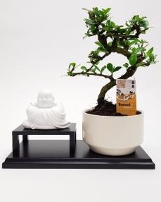 Buddha Bonsai 30 cm