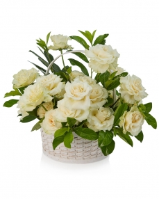 Basket with 25 white roses