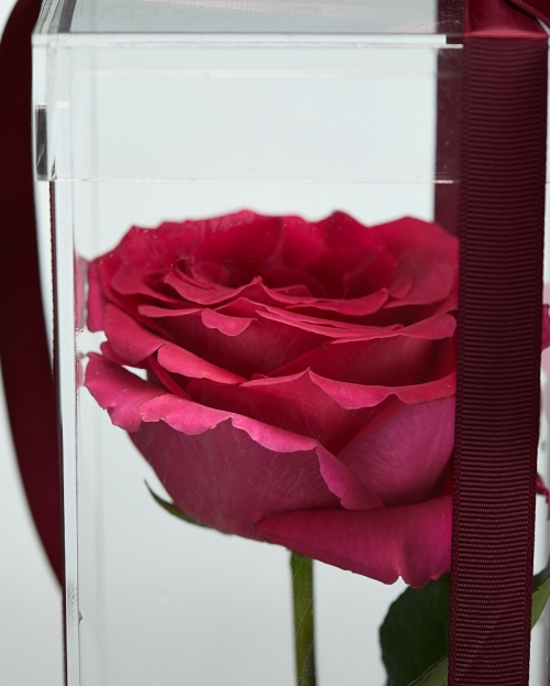 Cutie acrilica 1 trandafir ciclam