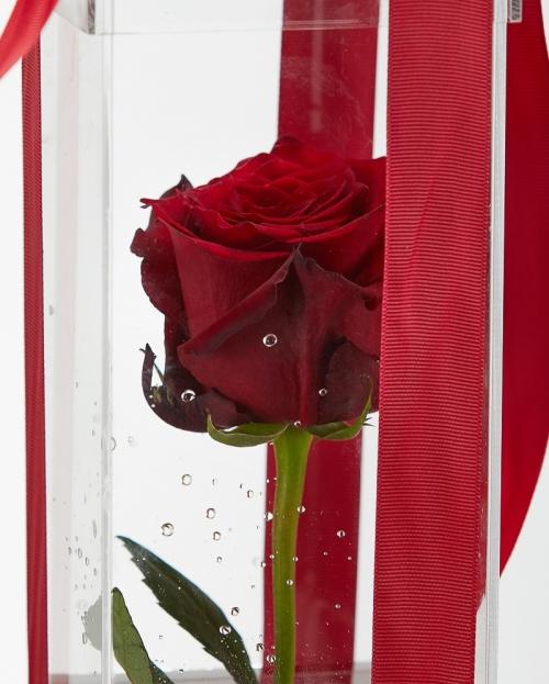 Cutie acrilica 1 trandafir rosu