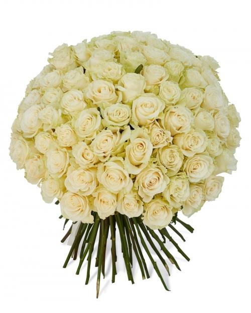 Buchet 101 trandafiri albi