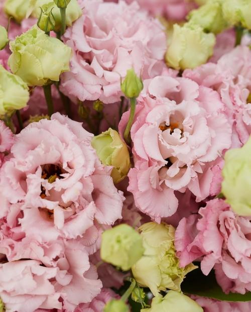 Buchet 15 lisianthus roz