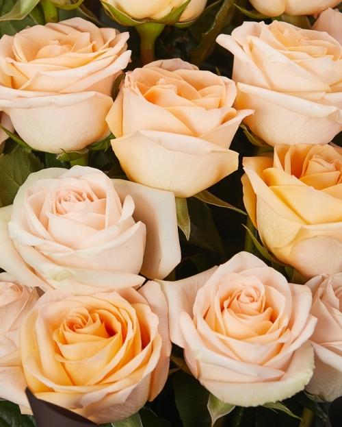 Buchet 19 trandafiri peach