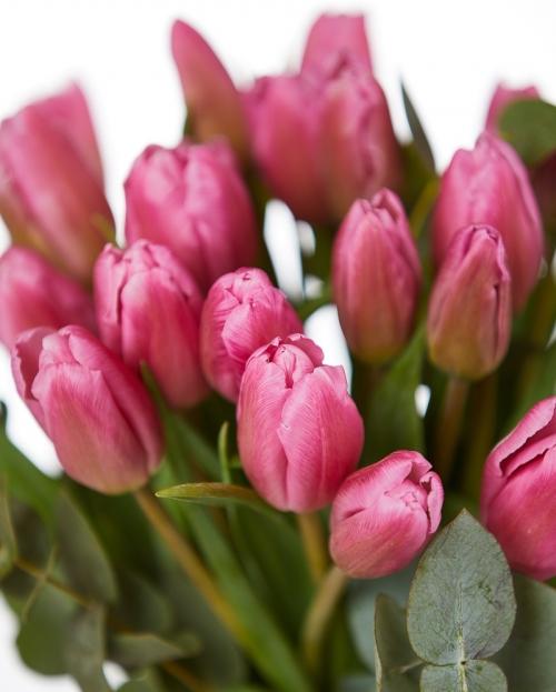 Buchet 25 lalele roz