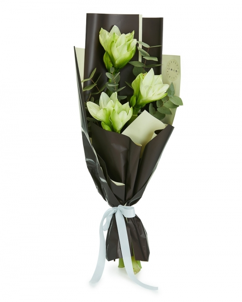 Buchet 3 amaryllis alb