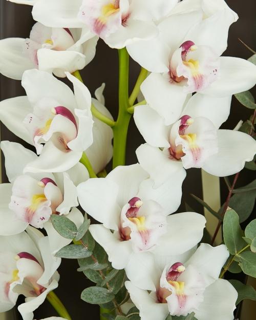 Buchet orhidee alba