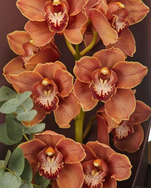 Buchet orhidee portocalie