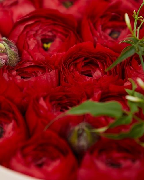 Cutie cu 19 ranunculus rosu