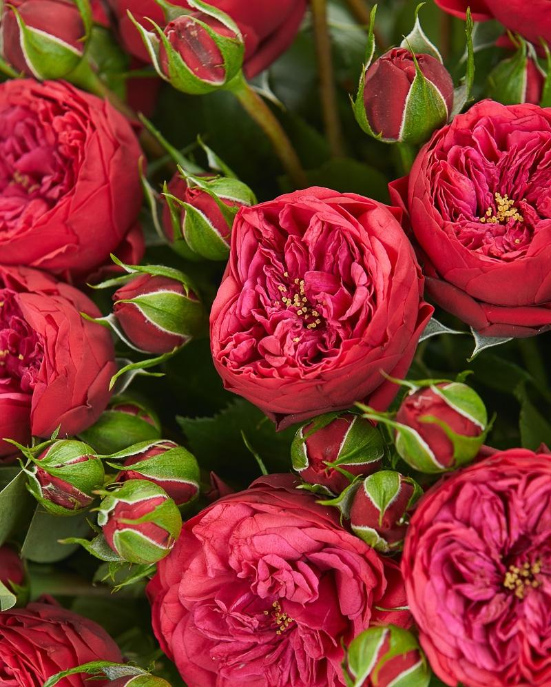 Buchet 29 mini trandafiri rosii
