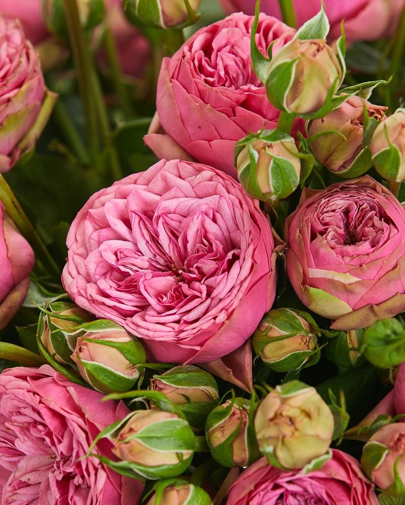 Buchet 29 mini trandafiri roz