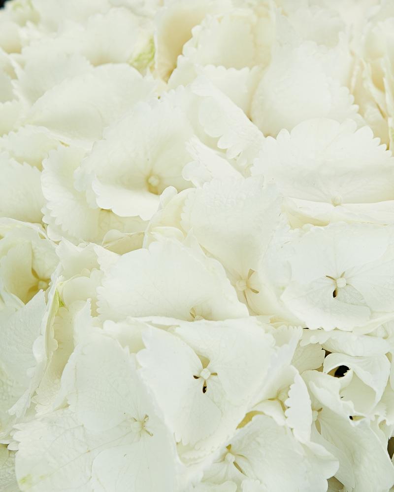 Buchet 3 hortensii albe