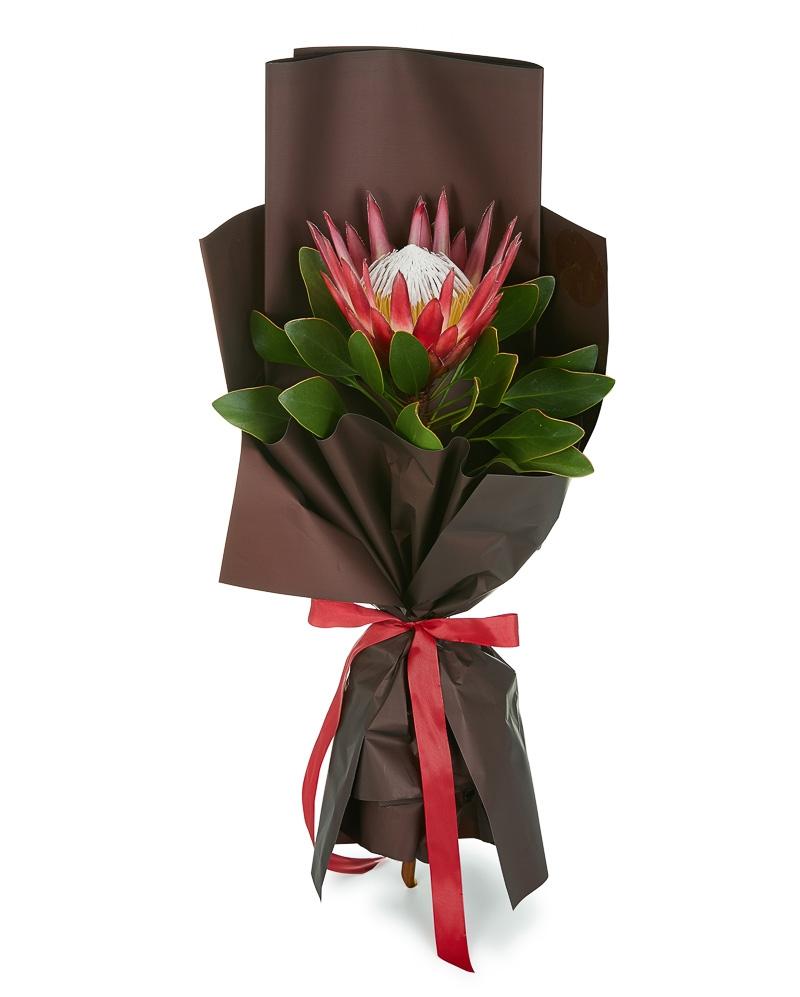 Buchet protea rosie